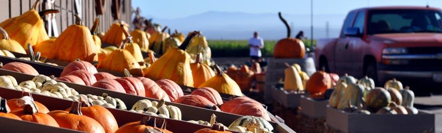 pumpkin--market